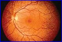 Retina azonosító beléptető rendszer